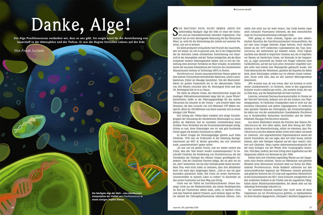 Danke, Alge!