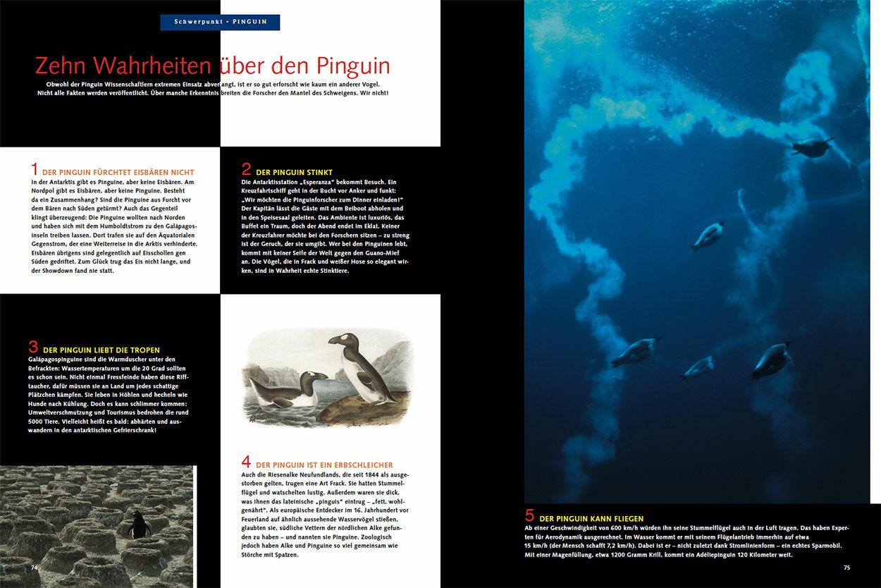 Zehn Wahrheiten über den Pinguin